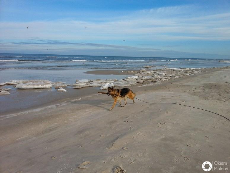 Viva - mój wieloletni psi kompan