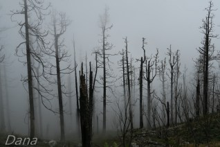 straszny spalony las, cisza i kruki