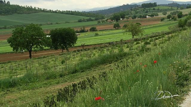 Okolice Vignaii