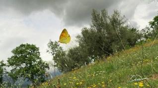 W pogoni za motylami