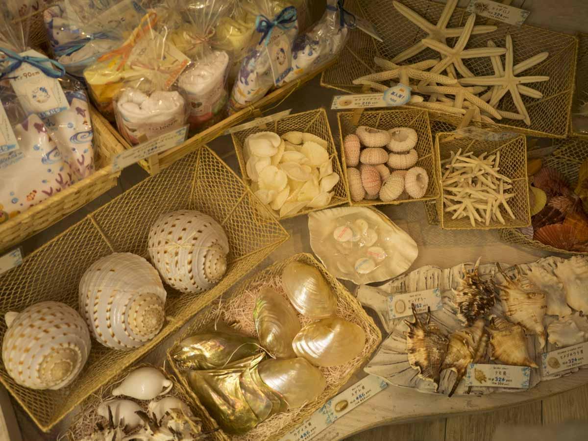 貝殻のアクセサリー