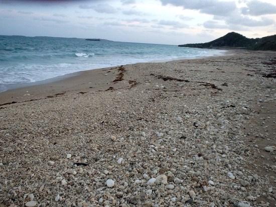 貝殻クラフト