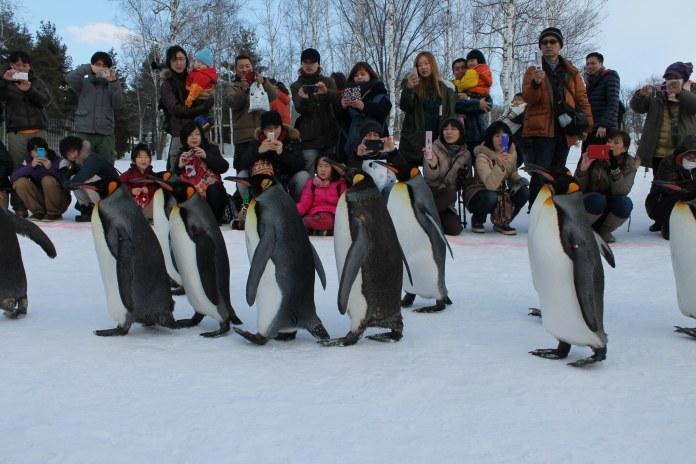 Sapporo Snow Festival | Okinawa Hai!