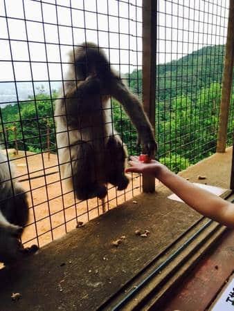 Monkey Mountain 2
