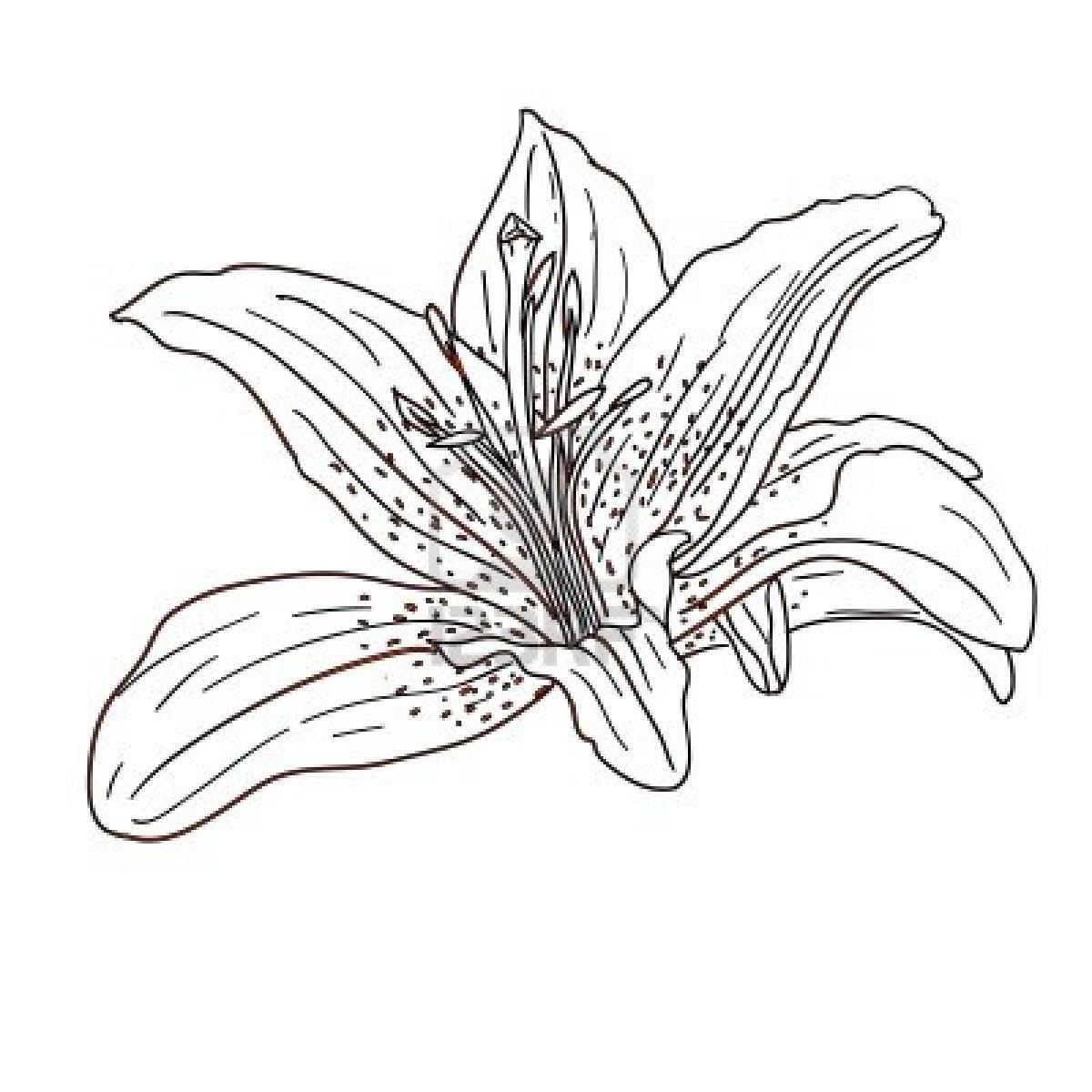 Coloring Pages Hawaiian Flowers Collection