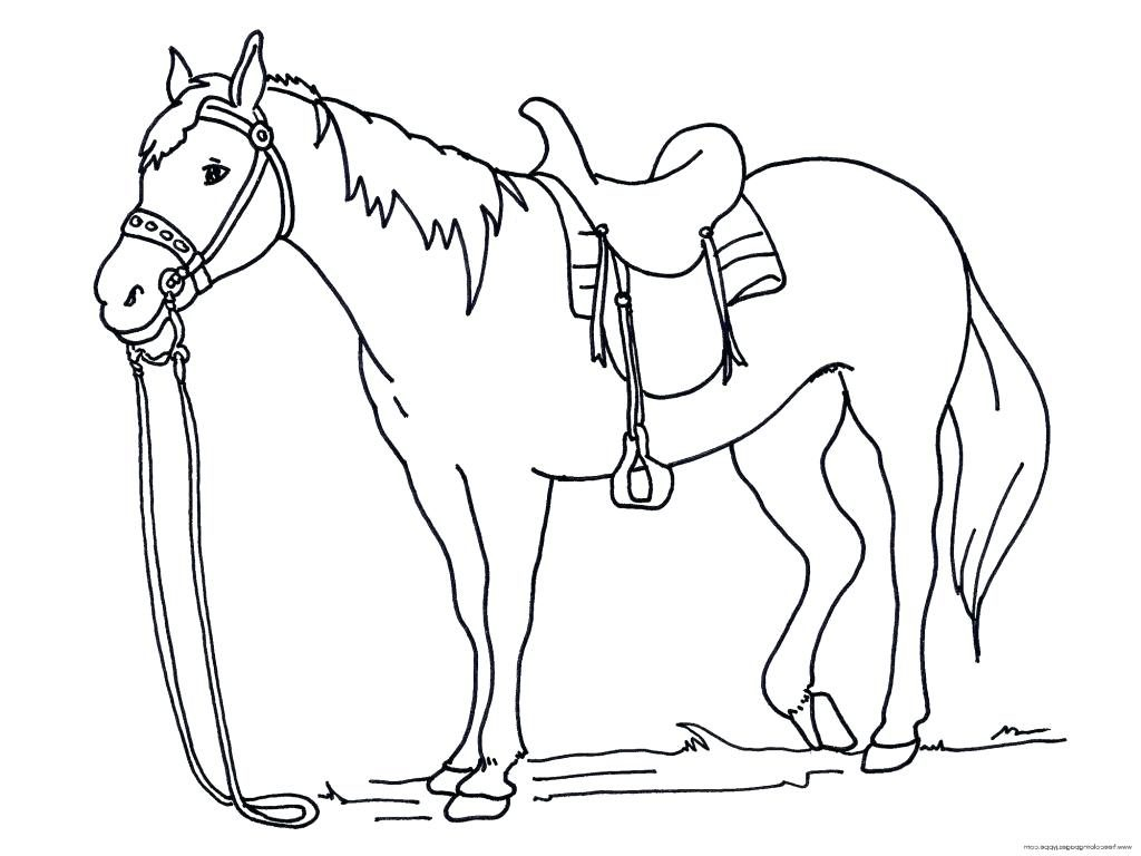Race Horse Head Line Drawing Sketch Coloring Page