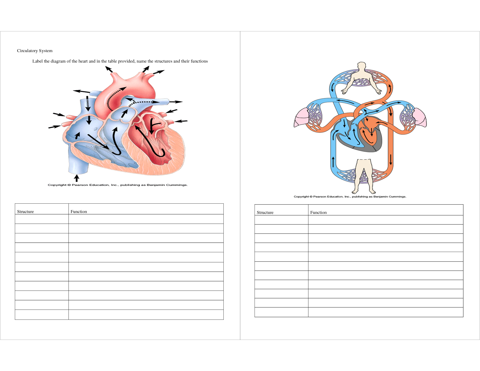Diagram Of The Heart With Labels For Kids
