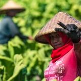 The Field Worker
