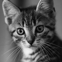 エロ画像だけじゃない!ネコ画像まとめ 32枚