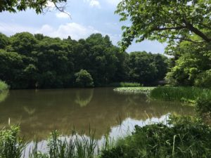 池の水をぜんぶ抜く