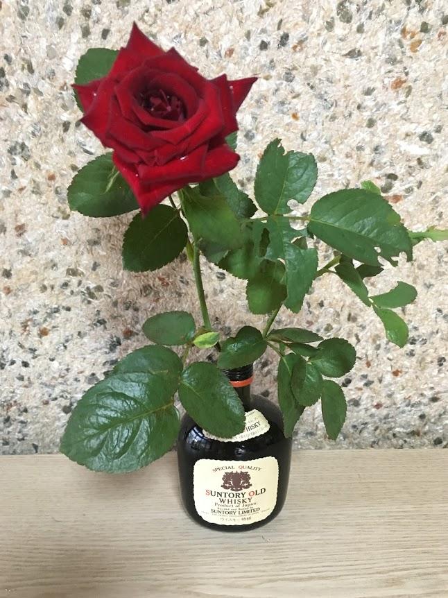 【転職の成功は運である】転職に成功した赤いバラの話