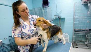 Angelia Eastin dries off Mya, a beagle, on Dec. 18 at Muddy Paws, a pet salon that trains women who have been released from prison. Eastin is among several women who visit the salon for work experience and job skills.