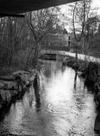 svart-hvitt bilde i Sandvedparken