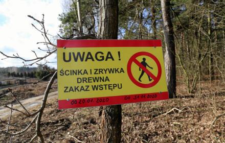 Leśnicy traktują obywateli z góry, manipulują, sięgają po przemoc. Dlaczego? Bo się boją [ROZMOWA]