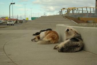 Perrosi odmaraju na vjetru