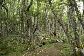 Gusta i kišovita šuma