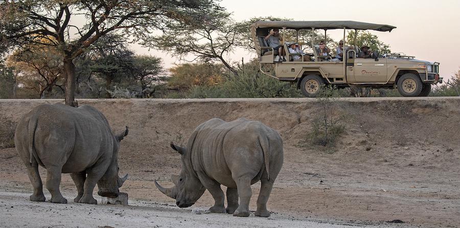 rhino research in okonjima