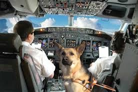 blind pilot