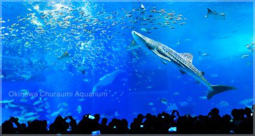 美ら海水族館 大水槽(写真引用:海洋博公園 施設案内)