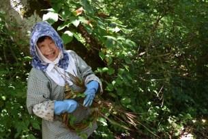 奥会津まちの山中に生育する「あけび」の″つる″が素材となっております。