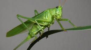 b5 2 300x166 - Niçin Böcek Yemiyoruz?