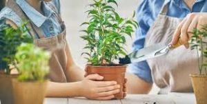 c2 300x151 - Ev Çiçekleri Bize Nasıl Zarar Verebilirler?