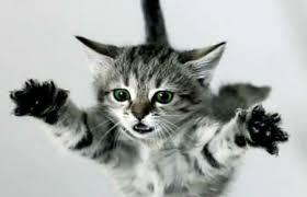 Kediler nasıl hep dört ayak üzerine düşerler?, okugit
