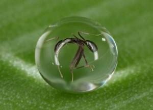 k2 5 - Yağmurda karıncalara niçin bir şey olmuyor?