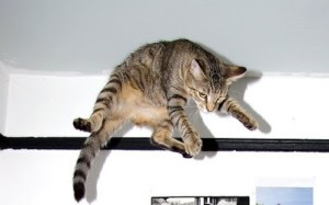 k4 5 300x187 - Kediler nasıl hep dört ayak üzerine düşerler?