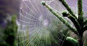 o2 300x158 - Örümcek ağının özelliği nedir?
