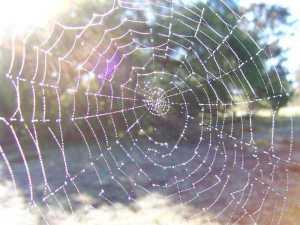 o4 300x225 - Örümcek ağının özelliği nedir?