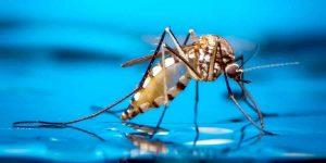s4 5 300x150 - Sivrisinekler İnsanı Niçin Sokar?