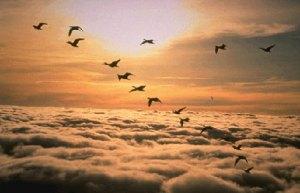 v4 2 300x193 - Kuşlar niçin 'V' şeklinde uçuyorlar?