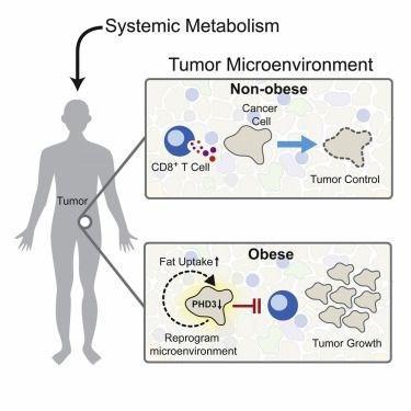 yagdan zengin diyet kanser riskini artirabilir 1 YWh1gsi7 - Yağdan zengin diyet kanser riskini artırabilir