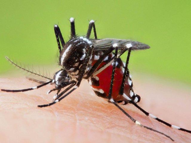 sivrisinegin koklama duyusuyla kanser dedektoru gelistirildi 1 lYLiDJcx - Sivrisineğin koklama duyusuyla kanser dedektörü geliştirildi
