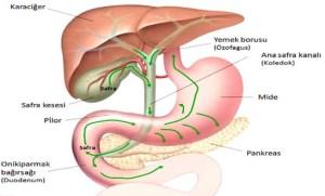 gastr 300x181 - Gastrit Belirtileri Nelerdir ?
