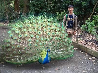 羽を広げたクジャクと記念撮影する奥村