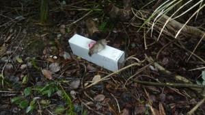 dead-rat-july2014