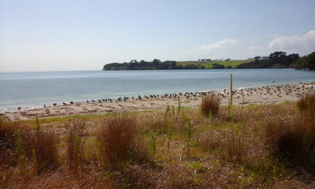 Bird news from the Beach – Friends Of Okura Bush (FOOB)
