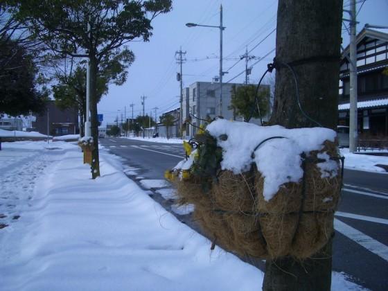 雪の中の花かご