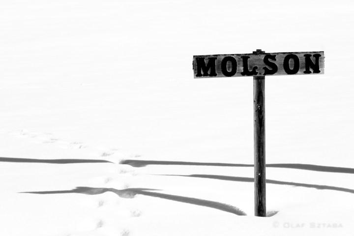 osztaba_molson_20170225__dsf6307