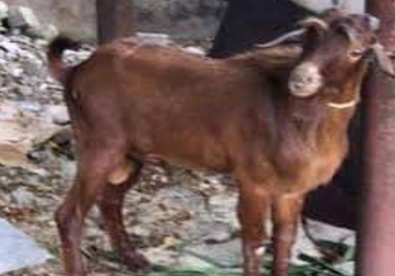 Man Kills Kinsman for Accusing Him of Stealing and Killing His Goat