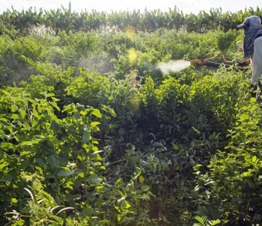 Anvisa aprovou novo marco regulatório para avaliação e classificação de agrotóxicos