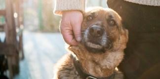 Esfriou: momento de pensar nas pessoas e nos animais de rua