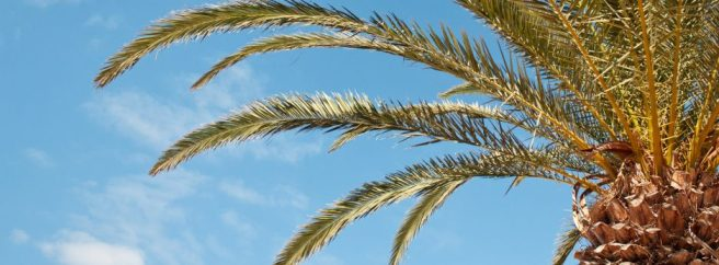 cropped-palm-transparent-100.jpg