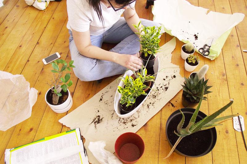 gardening mama jardinage appartement olamelama image 3
