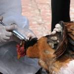 Vokietijoje – naujas paukščių gripo protrūkis