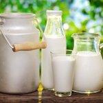 Pienas: tai vis dėlto sveika gerti ar ne?