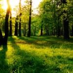 Gamtos galia – ilgesnis gyvenimas, gerėjanti sveikata