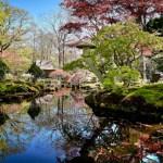 Šešioms savaitėms atidaromas Hagos japoniškasis sodas